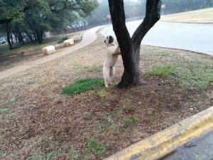Poet doggie is nature freak.